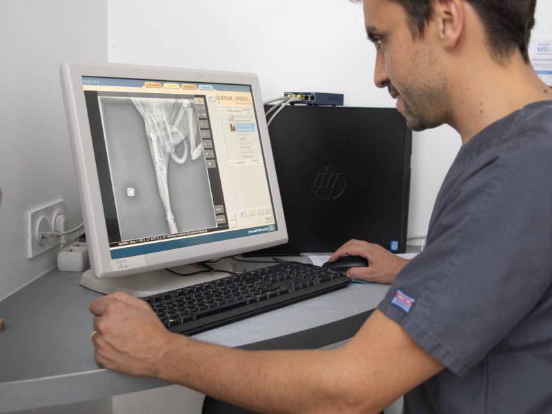 radiographie chat vétérinaire saint James