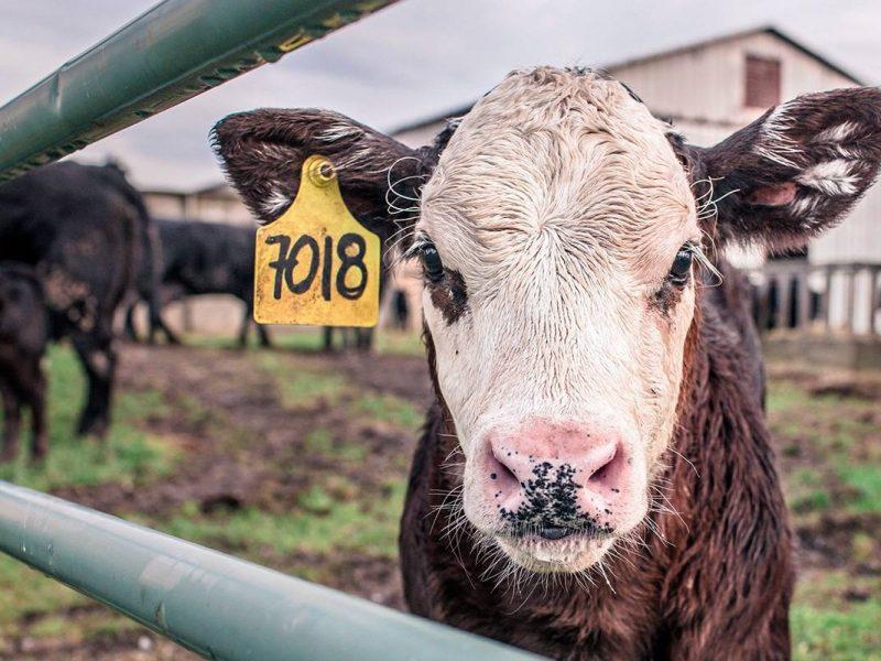 animal-countryside-agriculture-farm.jpg